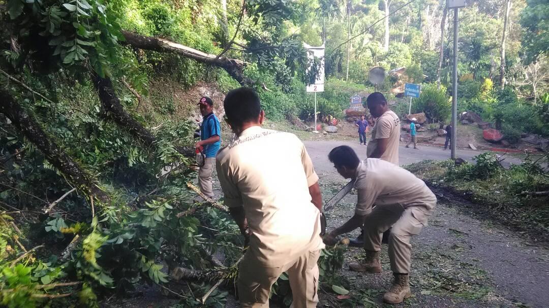 Pohon Tumbang di Maninjau